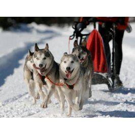 Zážitek - Mushing - jízda se psím spřežením - Královéhradecký kraj
