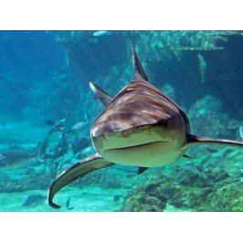 Zážitek - Potápění se žraloky - Zahraničí