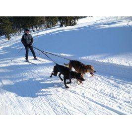 Zážitek - Skijöring se psím spřežením - Královéhradecký kraj
