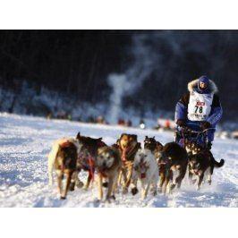 Zážitek - Den aljašským musherem - Královéhradecký kraj